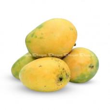 Mango- Imam