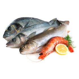 Fish & Seafoods