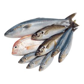 Sea Fish - Small